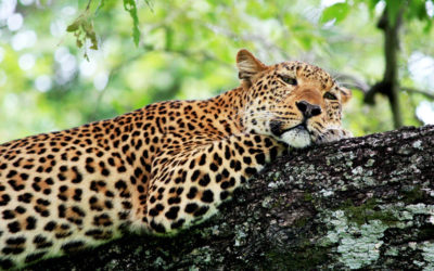 What is the best time for a holiday in Zambia?
