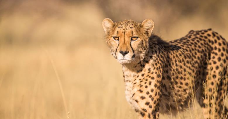 Botswana tip: stilstaan, niet wegrennen