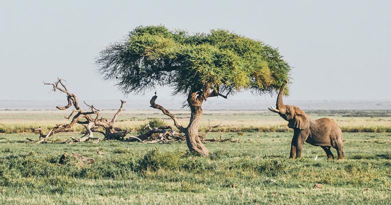 wildlife spotten in zambia