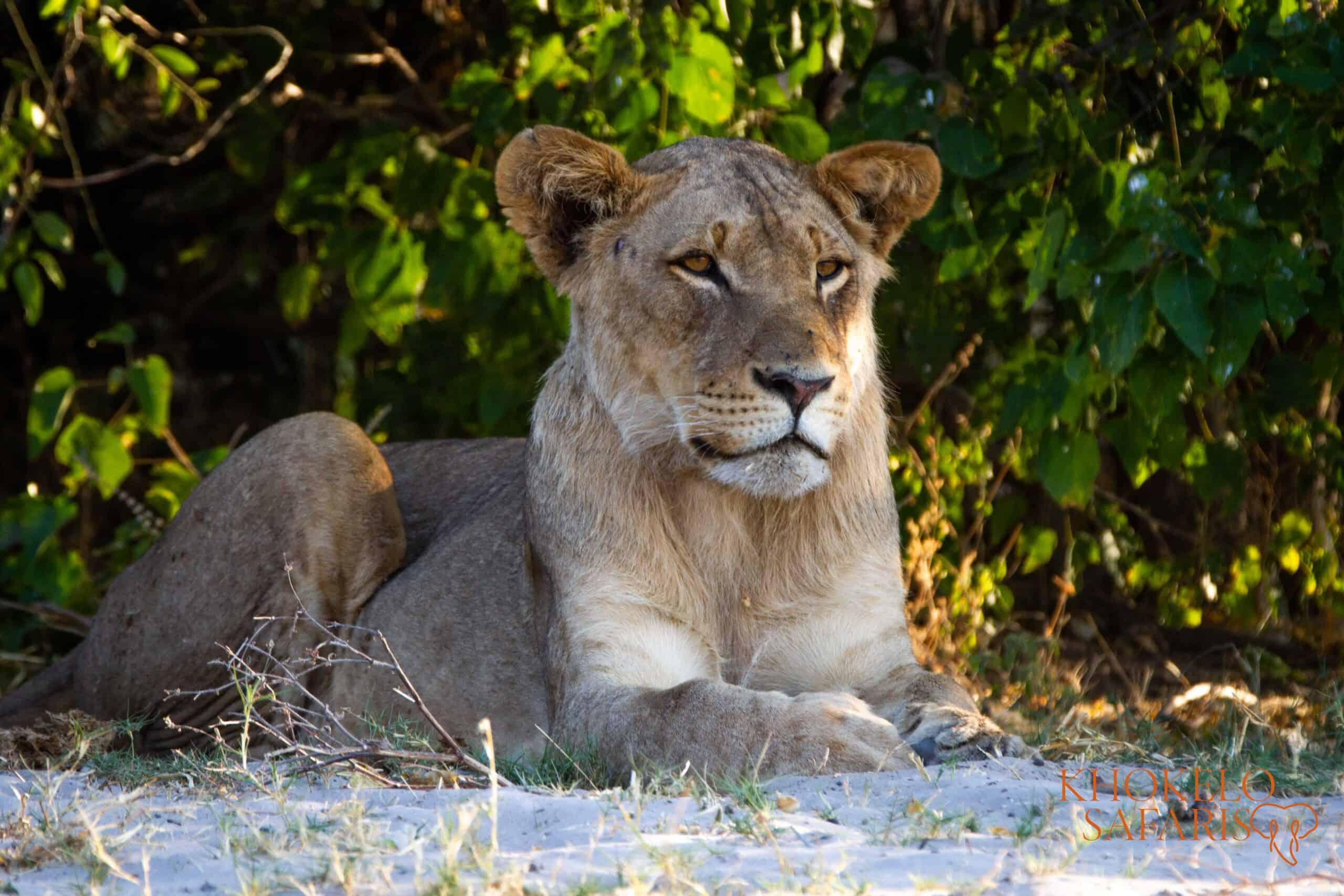 Safe travels in Botswana