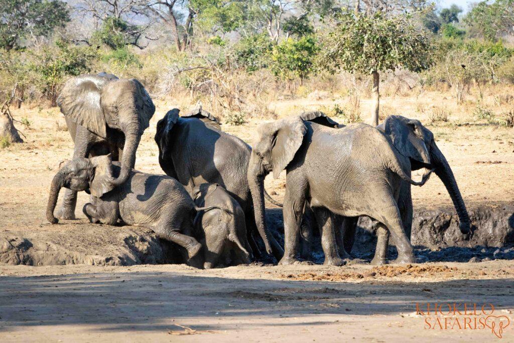elephants in waterpool Lower Zambezi selfdrive Zambia