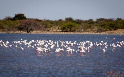 Parkfees national parks in Botswana