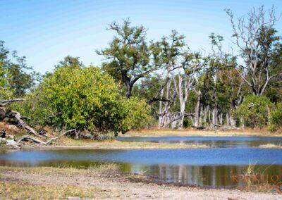 Khwai landscape selfdrive Botswana